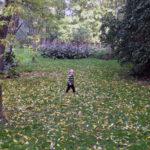 Opdagelse i Forstbotaniskhave i Aarhus